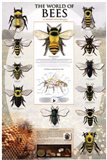 The World Of Bees Art Print