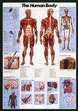 Human Body Art Print