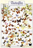 Butterfly types Art Print