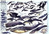 Whales and Dolphin Art Print