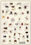 Arachnids Art Print
