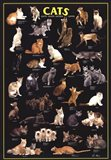 Cat Breeds Black Art Print