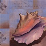Sanibel Conch Art Print
