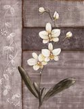 Orchid Shimmer I Art Print