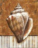 Vintage Shell II - mini Art Print