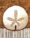 Vintage Shell Iv- mini Art Print
