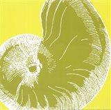 Graphic Shell II Art Print