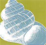 Graphic Shell III Art Print