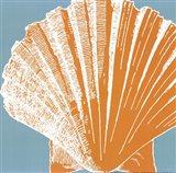 Graphic Shell IV Art Print