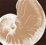 Natural Shell II - mini Art Print