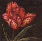 Tulipa I Art Print