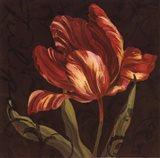 Tulipa II Art Print