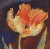 Dusk Tulip I Art Print