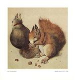 Squirrels, c.1512 Art Print