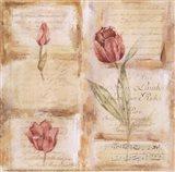 Rose Concerto III Art Print