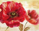 Passion for Poppies I Art Print