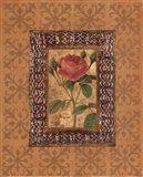Rose Illumination I Art Print