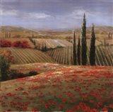 Tuscan Cypress II Art Print