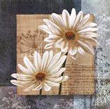 Daisy Field I Art Print