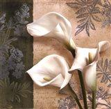 Lily Fair Art Print