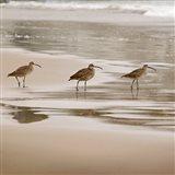 Shore Birds II Art Print