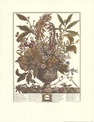 January/Twelve Months of Flowers, 1730