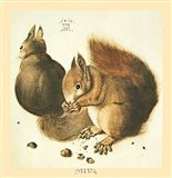 Squirrels Art Print