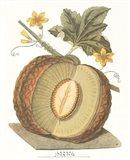 Melon - Sharlyn Art Print