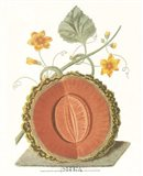 Melon - Cantalope Art Print