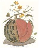 Melon - Watermelon Art Print