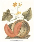 Melon - Persian Art Print