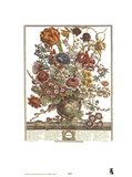March/Twelve Months of Flowers, 1730 Art Print