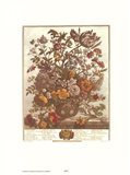 May/Twelve Months of Flowers, 1730 Art Print