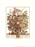 July/Twelve Months of Flowers, 1730 Art Print