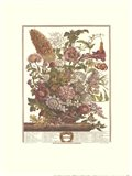August/Twelve Months of Flowers, 1730 Art Print