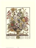 September/Twelve Months of Flowers, 1730 Art Print