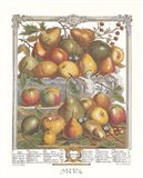 January/Twelve Months of Fruits, 1732 Art Print