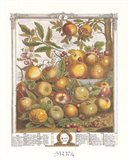 May/Twelve Months of Fruits, 1732 Art Print