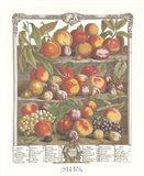 August/Twelve Months of Fruits, 1732 Art Print