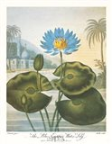 The Blue Egyptian Water-Lily Art Print