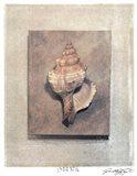 Seashell Study III Art Print
