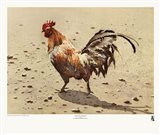 Banty Rooster Art Print