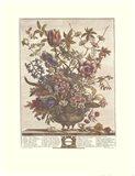 February/Twelve Months of Flowers, 1730 Art Print