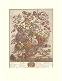 May/Twelve Months of Flowers, 1730 Art Print