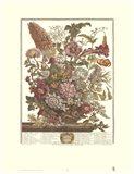 August/Twelve Months of Flowers, 1730 Art Print