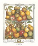 February/Twelve Months of Fruits, 1732 Art Print