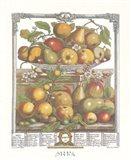March/Twelve Months of Fruits, 1732 Art Print