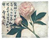 Oriental Peony Art Print