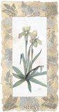 Elegant Orchid Art Print