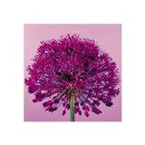 Pink Allium Art Print